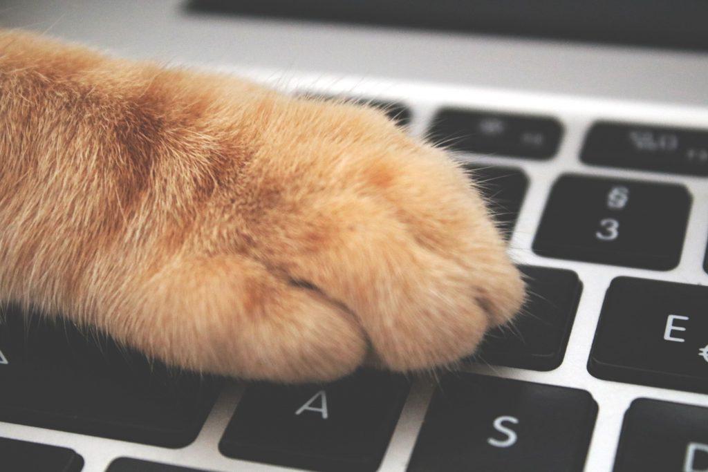 Chat qui écrit sur un clavier d'ordinateur