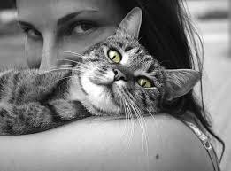 câlin-chat