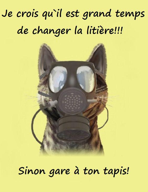 changer-litière