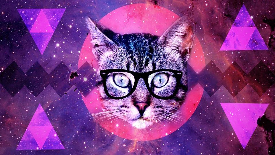 chat-qui-observe-avec-des-lunettes
