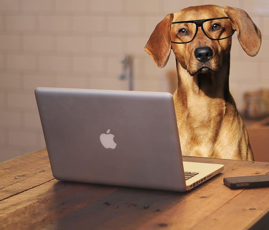 chien-etude-lunettes-mac